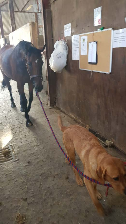 Hank leading the horse with reins in his mouth