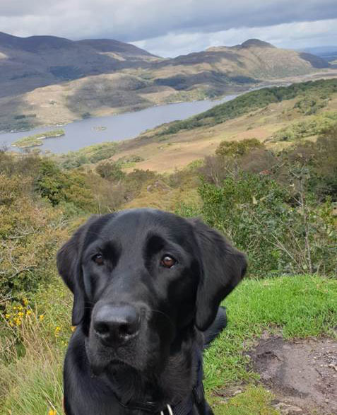 Izzy - Guide Dog for the Blind - Kerry Mountain October 2019