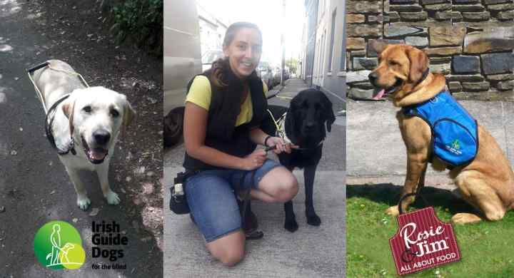 Hank, Champ & Izzy - Guide Dogs for the Blind
