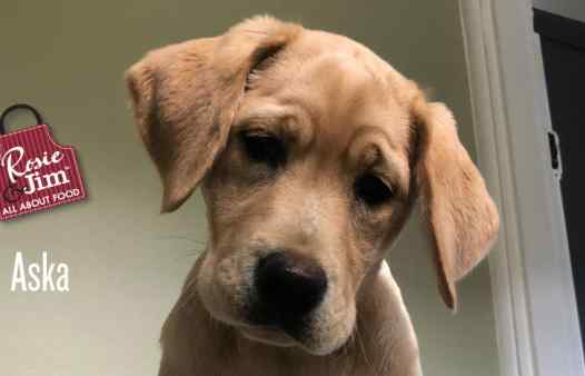 Guide Dogs for the Blind - puppies: Aska