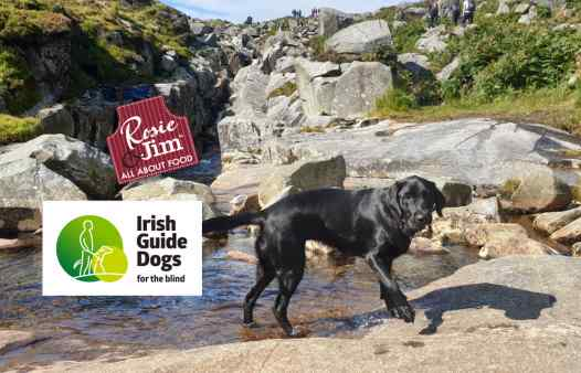 Izzy - Guide Dog for the Blind - Glendalough September 2019