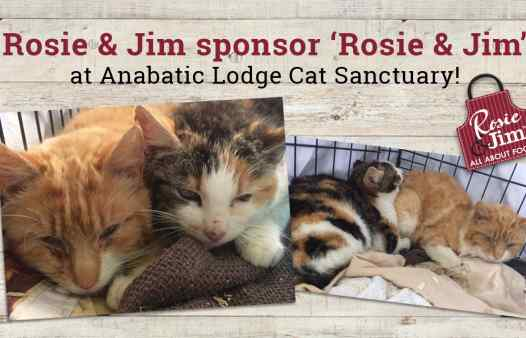 Rosie & Jim cats